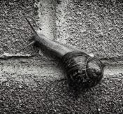 caracol pared-2