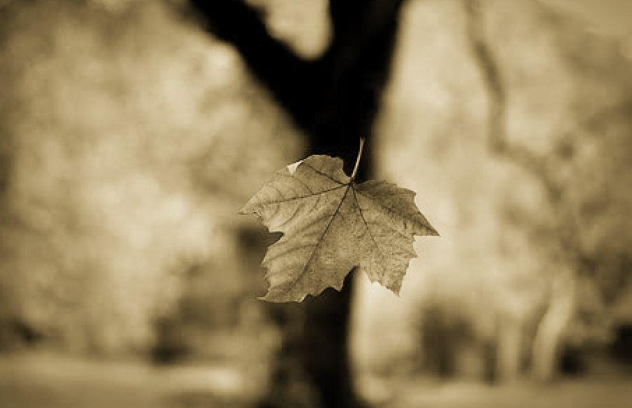 hoja-cayendo-en-otoño-sepia
